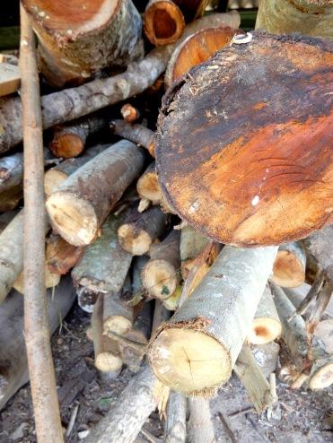 Cuba Farm logs fiirewood DSCN3579
