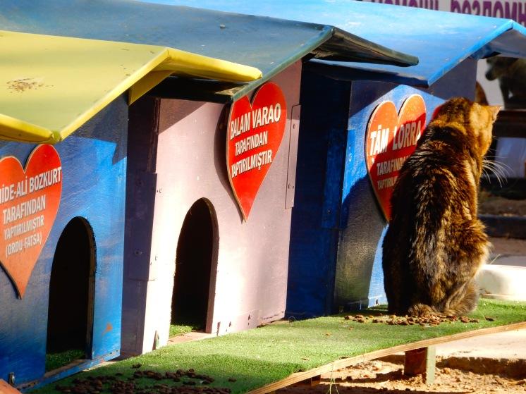 Turkey Antalya cats dogs DSCN5192
