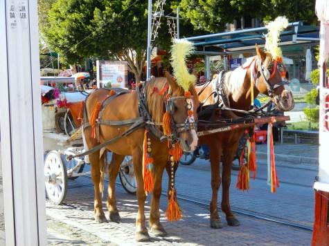 Turkey Antalya DSCN5187