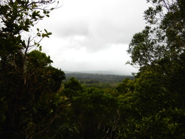 Mauritius Ebony Rainforest Cherrylsblog.com DSCN0168