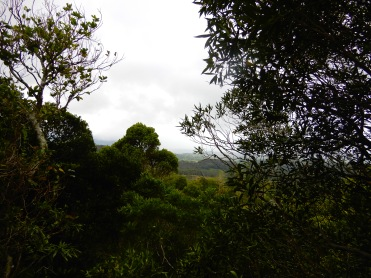 Mauritius Ebony Rainforest Cherrylsblog.com DSCN0172