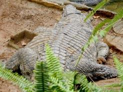Mauritius La Vanille Nature Park Crocodile Park DSCN0252