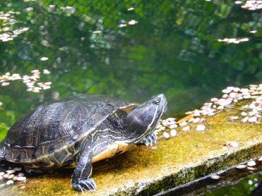Mauritius La Vanille Nature Park Crocodile Park DSCN0279