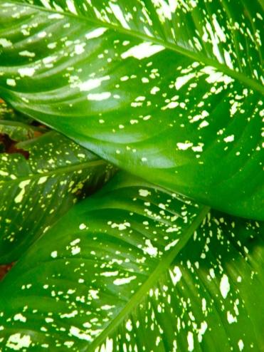 Mauritius La Vanille Nature Park Crocodile Park DSCN0334