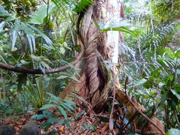 Mauritius La Vanille Nature Park Crocodile Park DSCN0347