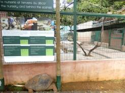 Mauritius La Vanille Nature Park Crocodile Park DSCN0386