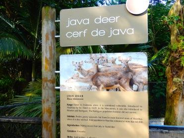 Mauritius La Vanille Nature Park Crocodile Park DSCN0445
